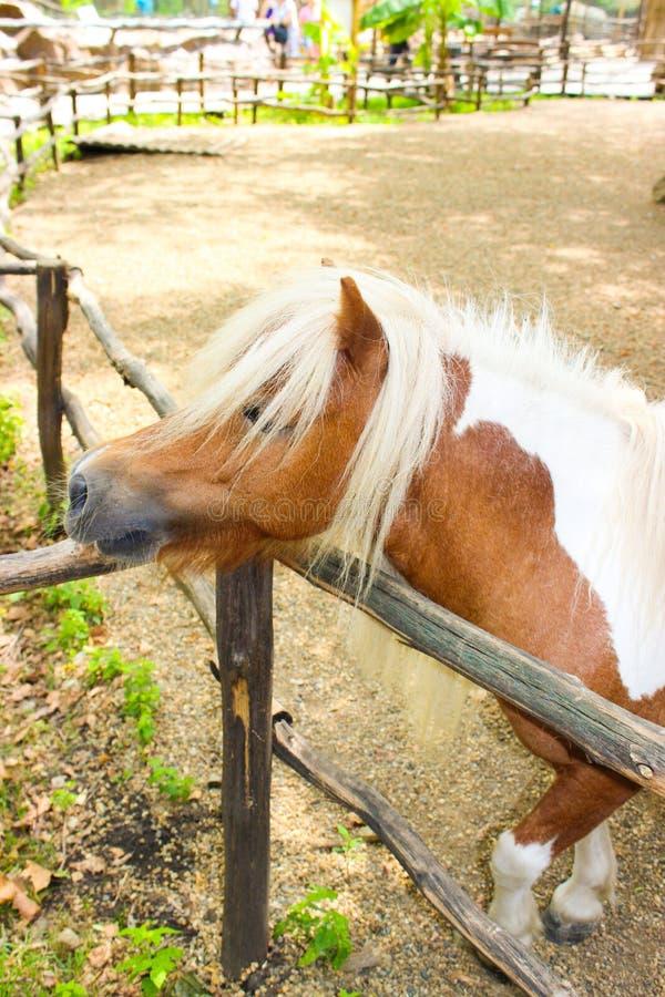 Ruwharige hardworking poney De leuke poney ging naar de omheining van zijn vogelhuis stock foto's