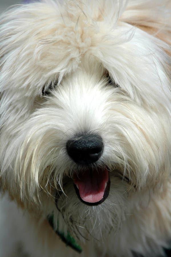 Ruwharige Hond royalty-vrije stock afbeeldingen