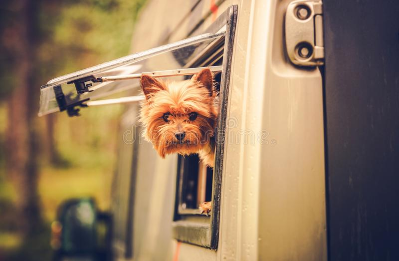RV Travel with Dog royalty free stock photography