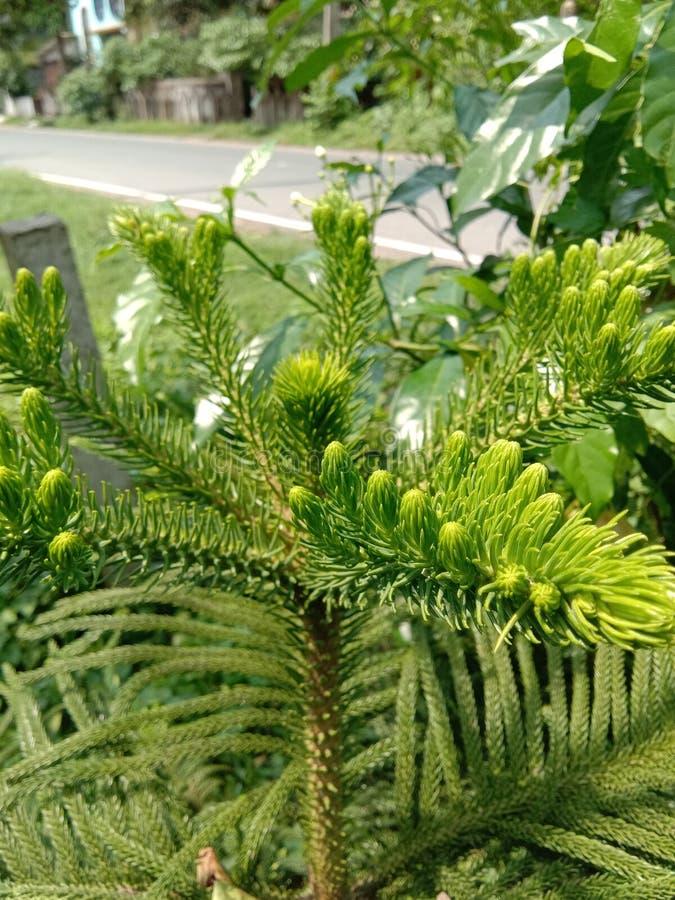?rvore da flor no jardim imagem de stock