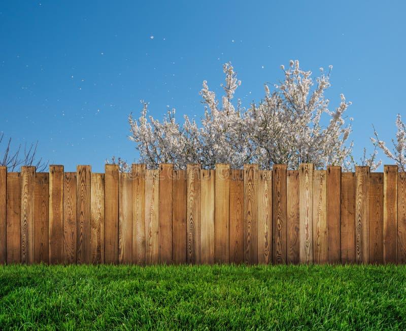 ?rvore da mola no quintal e na cerca de madeira do jardim ilustração royalty free