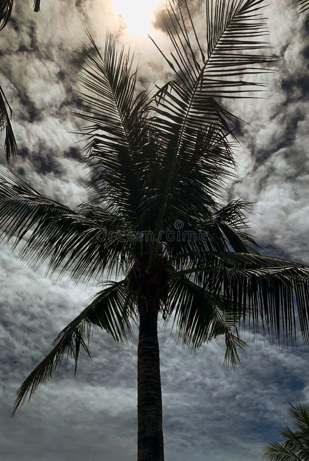 ?rvore de coco sob o c?u azul e o sol brilhante imagens de stock