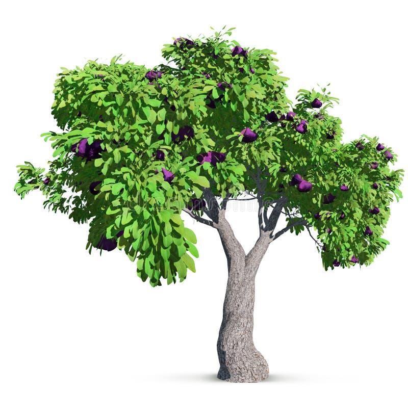 ?rvore de figo isolada com as folhas detalhadas altas ilustração do vetor