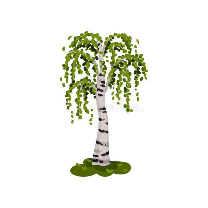 ?rvore de vidoeiro Tronco branco com pontos pretos Ilustra??o do vetor no fundo branco ilustração stock