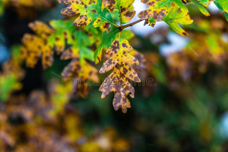 ?rvore e folhas durante o outono da queda ap?s a chuva imagens de stock royalty free