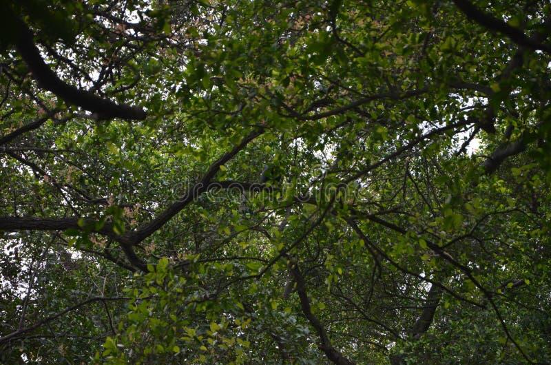 ?rvore na floresta imagens de stock royalty free