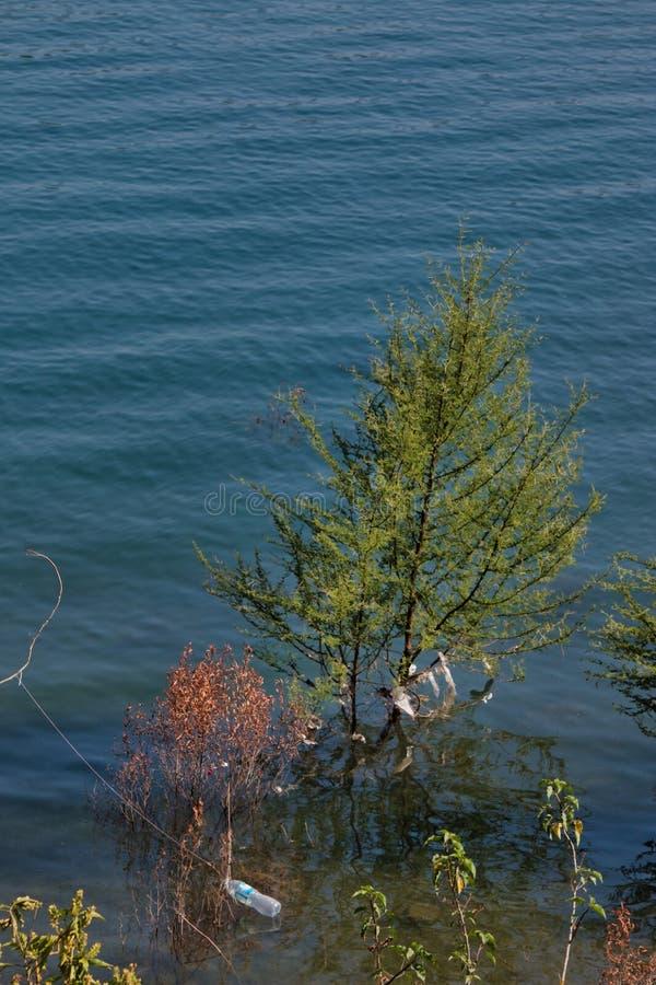 ?rvore no meio do mar imagens de stock royalty free