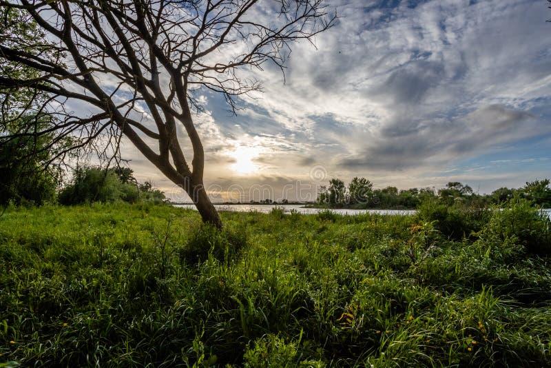 ?rvore nos bancos do rio Tejo Tagus em Cartaxo, Santarem, Portugal foto de stock royalty free
