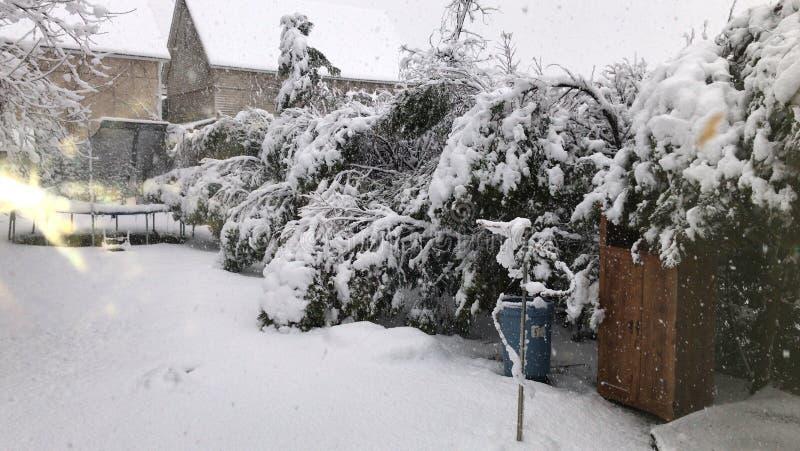 ?rvores da neve do inverno imagens de stock royalty free