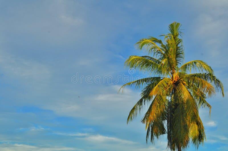 ?rvores de coco com as nuvens brancas de surpresa e o fundo do c?u azul imagem de stock