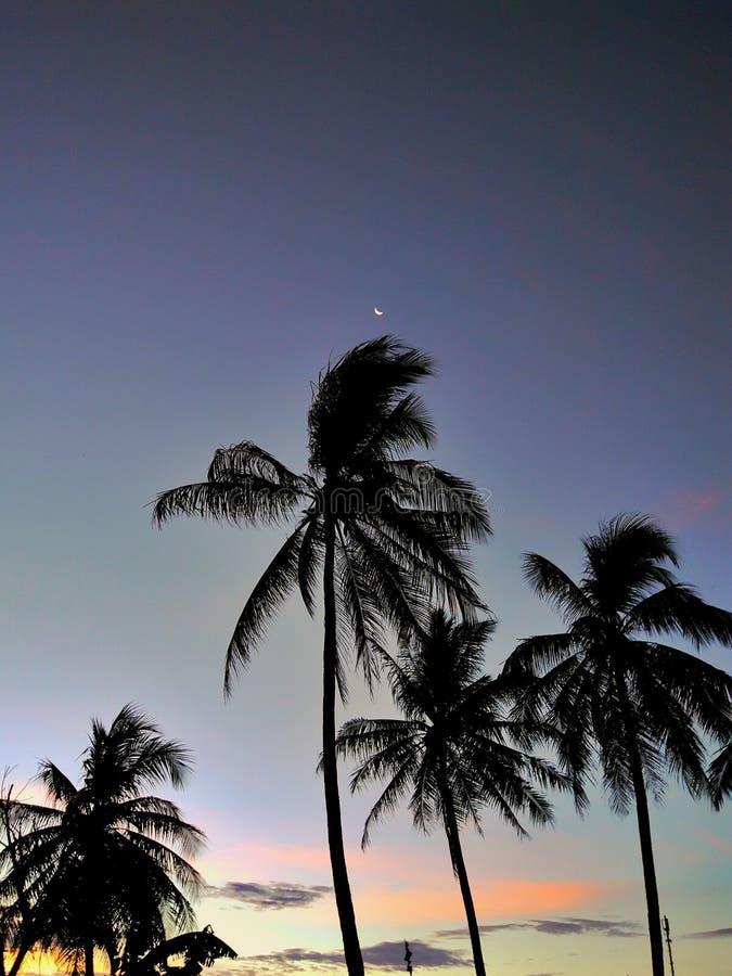 ?rvores de coco da silhueta durante o por do sol fotografia de stock