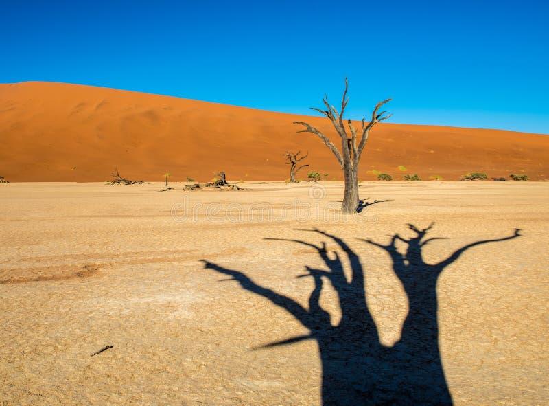 ?rvores inoperantes de Camelthorn e dunas vermelhas em Deadvlei, Sossusvlei, parque nacional de Namib-Naukluft, Nam?bia imagens de stock