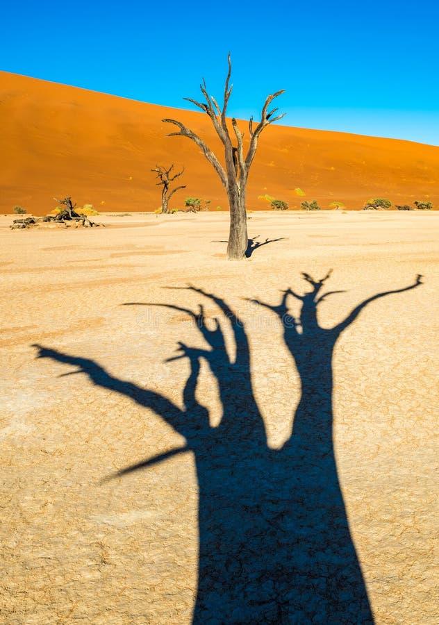 ?rvores inoperantes de Camelthorn e dunas vermelhas em Deadvlei, Sossusvlei, parque nacional de Namib-Naukluft, Nam?bia fotos de stock