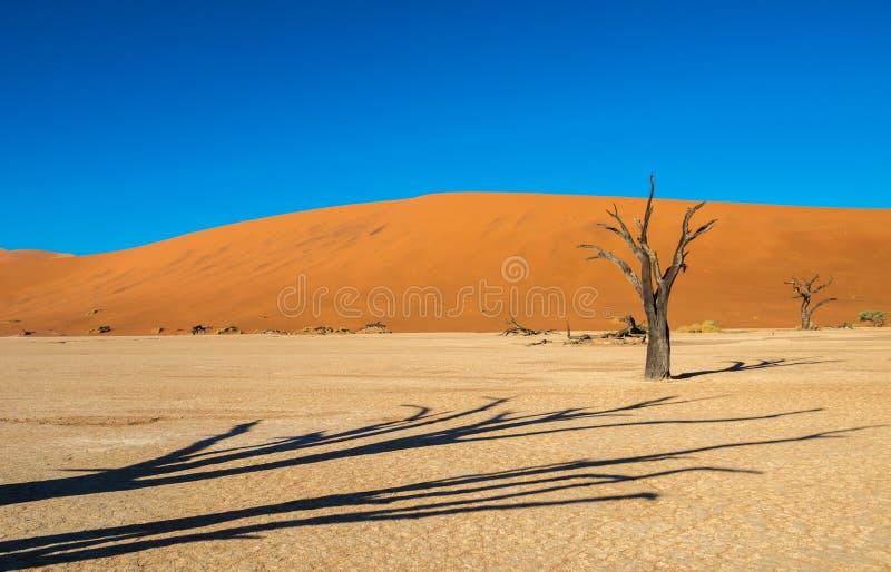 ?rvores inoperantes de Camelthorn e dunas vermelhas em Deadvlei, Sossusvlei, parque nacional de Namib-Naukluft, Nam?bia fotografia de stock