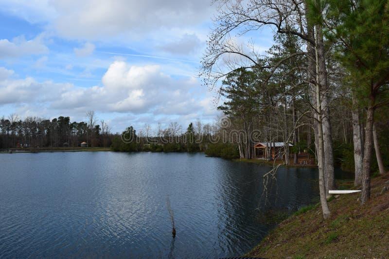 ?rvores na costa do lago fotos de stock royalty free