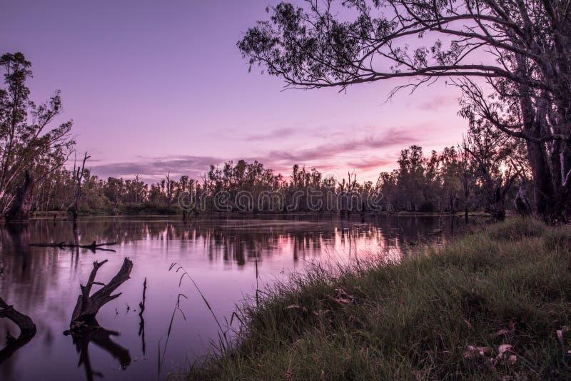 Árvores no lago Mulwala Austrália fotografia de stock