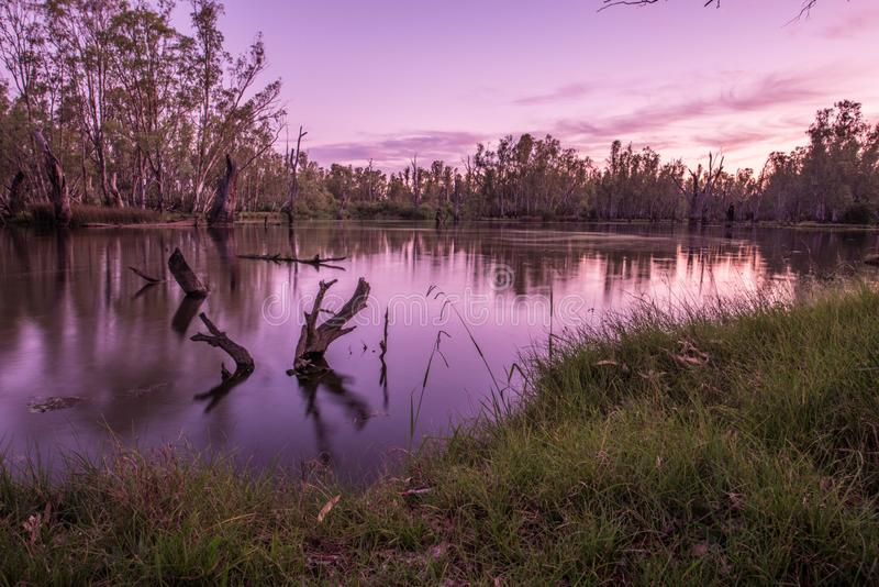 Árvores no lago Mulwala Austrália imagens de stock