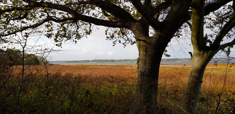 ?rvores perto do lago fotografia de stock royalty free