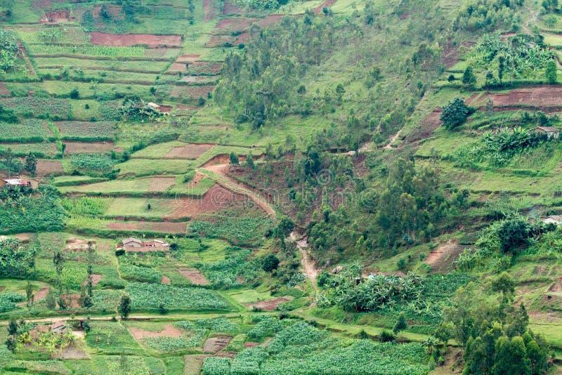 Rwanda obrazy royalty free
