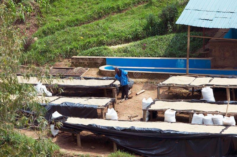 Rwandan coffee washing and dry station stock images