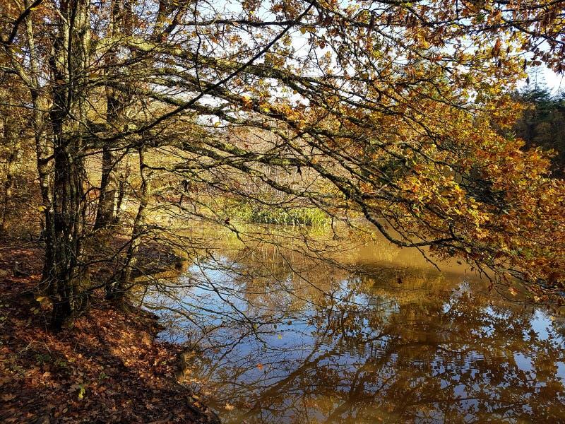 Rwflecteerde herfstschoonheid, bomen overhangend een meer in East Sussex royalty-vrije stock foto