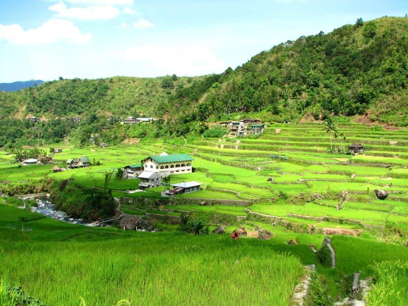 ryż hapao tarasuje miasta fotografia stock