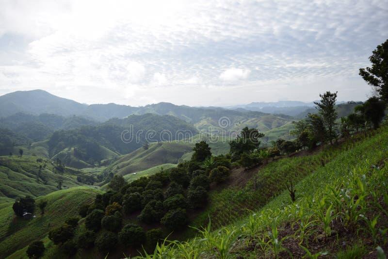 Ryżowa góra fotografia stock