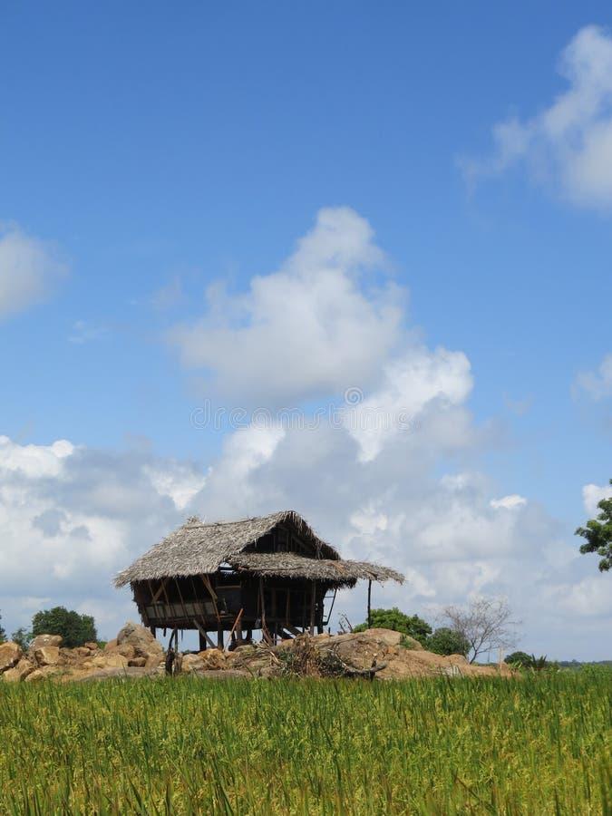 Ryżowej kultury typowy dom obrazy stock
