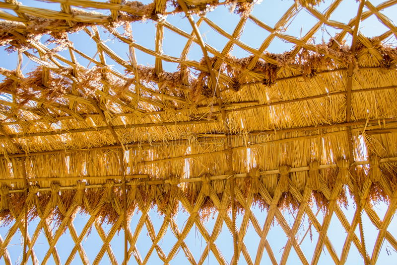 Ryżowej rośliny dach zdjęcie royalty free