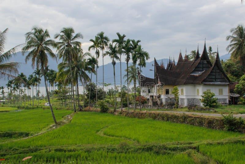 Ryżowi irlandczycy i tradycyjni Indonezyjscy domy na Sumatra zdjęcie stock