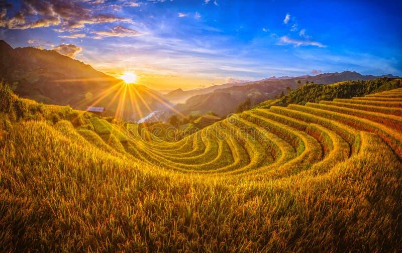 Ryżowi pola na tarasowatym z drewnianym pawilonem przy zmierzchem w Mu Mogą zdjęcie royalty free