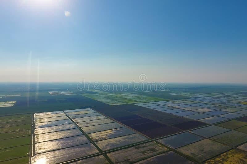 Ryżowi pola zalewają z wodą Krajobraz przed słońcem Zalewający ryżowi irlandczycy Agronomic metody rosnąć ryż wewnątrz obraz stock