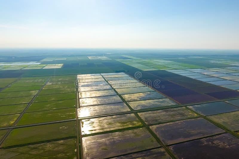 Ryżowi pola zalewają z wodą Krajobraz przed słońcem Zalewający ryżowi irlandczycy Agronomic metody rosnąć ryż wewnątrz obrazy stock