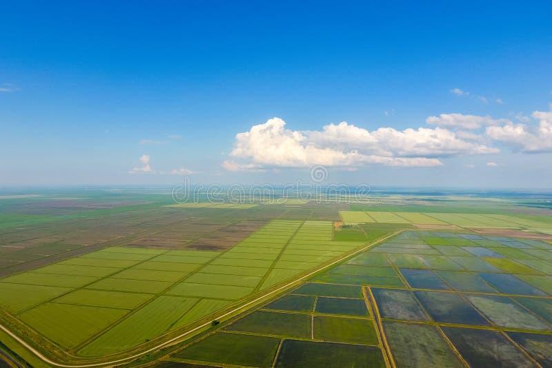Ryżowi pola zalewają z wodą Zalewający ryżowi irlandczycy Agronomic metody rosnąć ryż w polach obraz royalty free