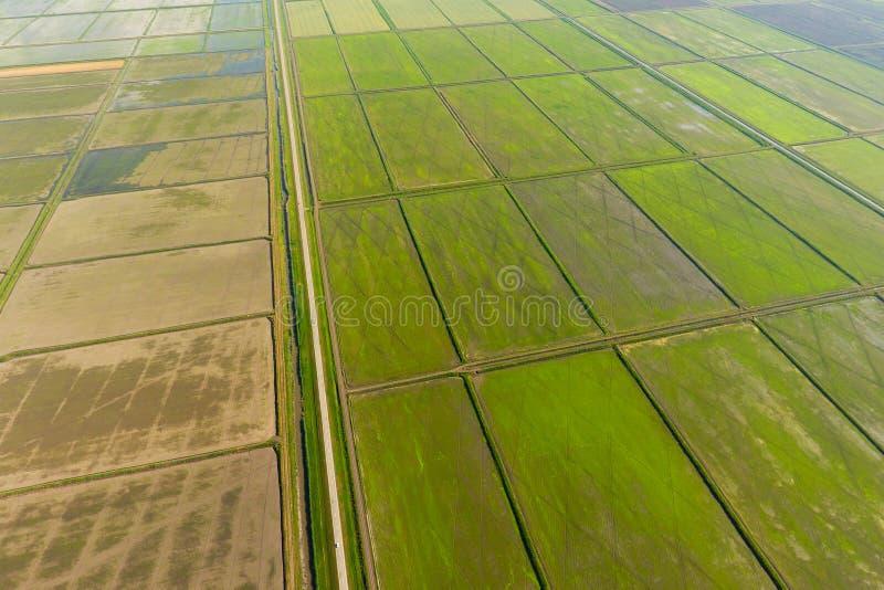 Ryżowi pola zalewają z wodą Zalewający ryżowi irlandczycy Agronomic metody rosnąć ryż w polach fotografia royalty free