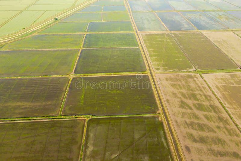 Ryżowi pola zalewają z wodą Zalewający ryżowi irlandczycy Agronomic metody rosnąć ryż w polach fotografia stock