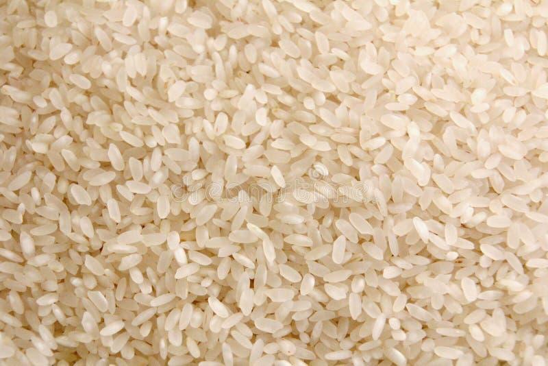 Ryżowy tło obraz stock