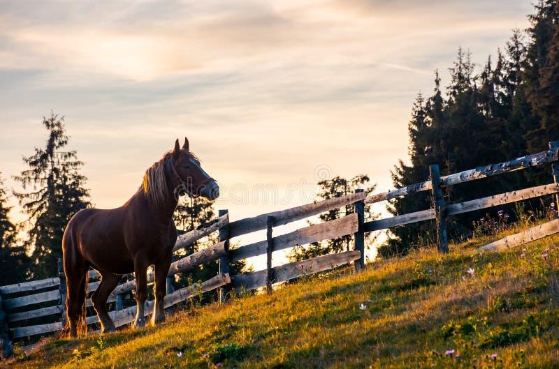 Ryży koń blisko drewnianego ogrodzenia obrazy stock
