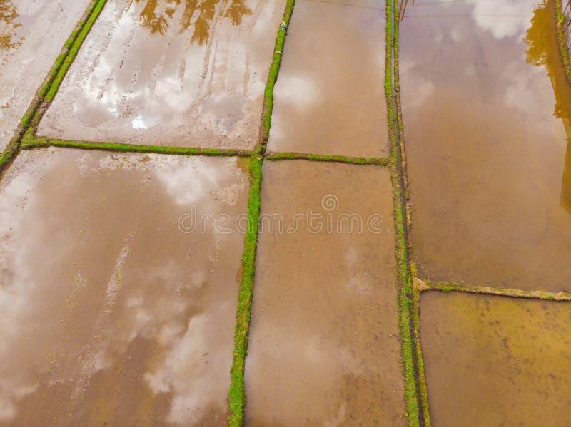 Ry?owi pola zalewaj? z wod? Zalewaj?cy ry?owi irlandczycy Agronomic metody rosn?? ry? w polach wylew obraz stock