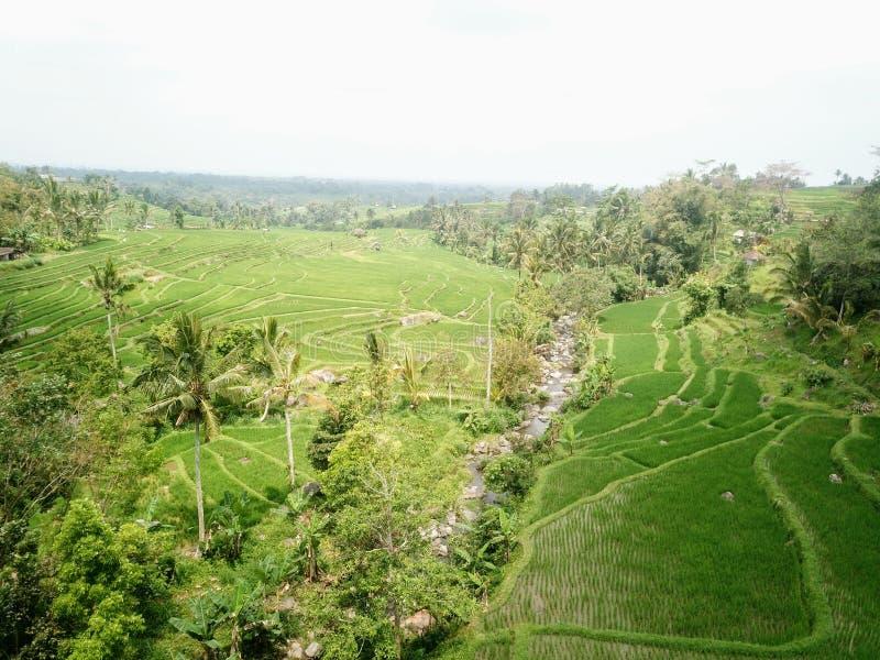 Ry?owi tarasy Jatiluwih w g?rach Bali wyspa w Indonezja obrazy stock
