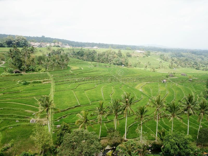 Ry?owi tarasy Jatiluwih w g?rach Bali wyspa w Indonezja fotografia stock