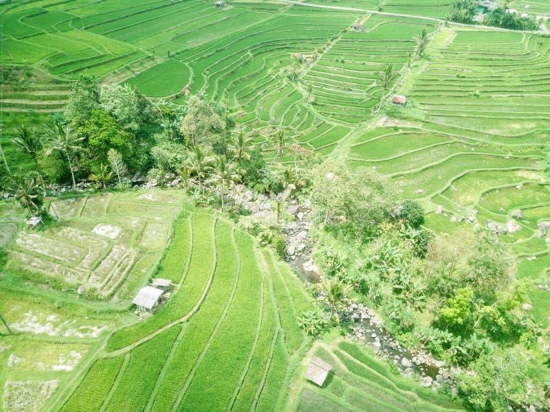 Ry?owi tarasy Jatiluwih w g?rach Bali wyspa w Indonezja zdjęcie stock