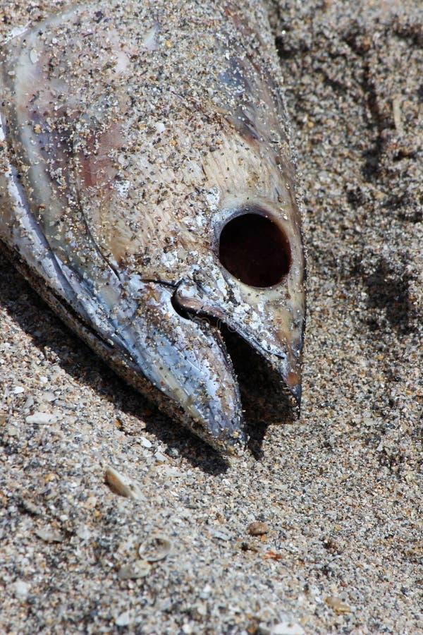 ryb wód zdjęcie stock