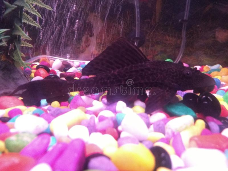Ryba obrazy royalty free