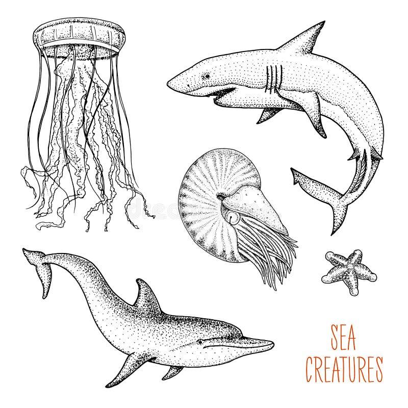 Ryba, denny istota delfin lub biały rekin i łodzika pompilius, jellyfish i rozgwiazda, grawerująca ręka rysująca w starym ilustracja wektor