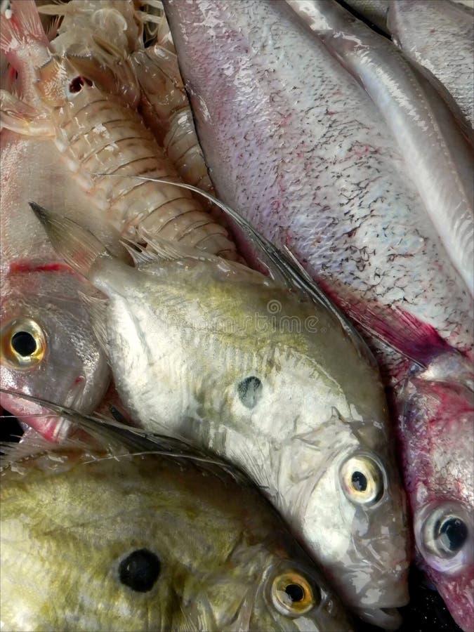 Ryba dla gulaszu obrazy royalty free