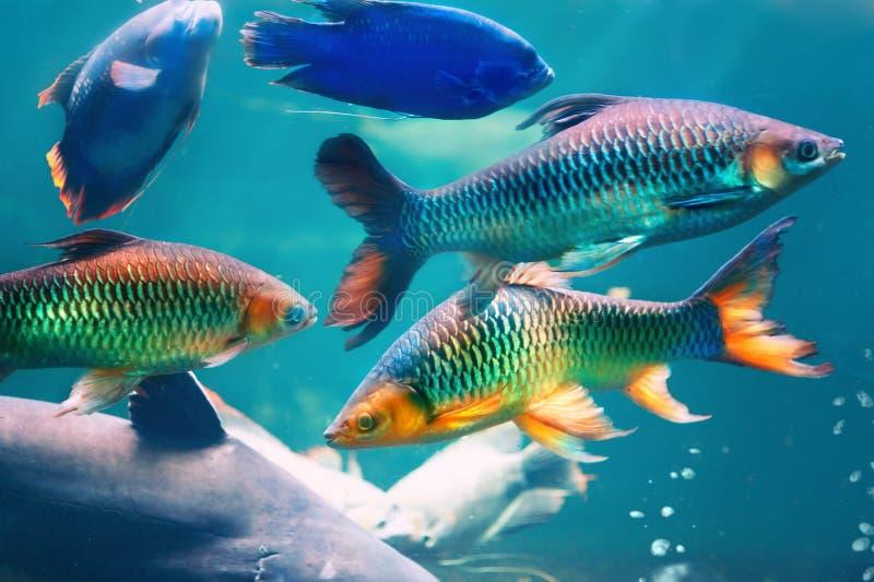 ryba gili Indonesia wyspy lombok meno blisko dennego żółwia underwater światu obrazy royalty free