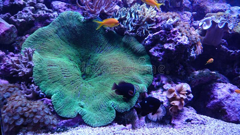 Ryba i koral zdjęcie royalty free