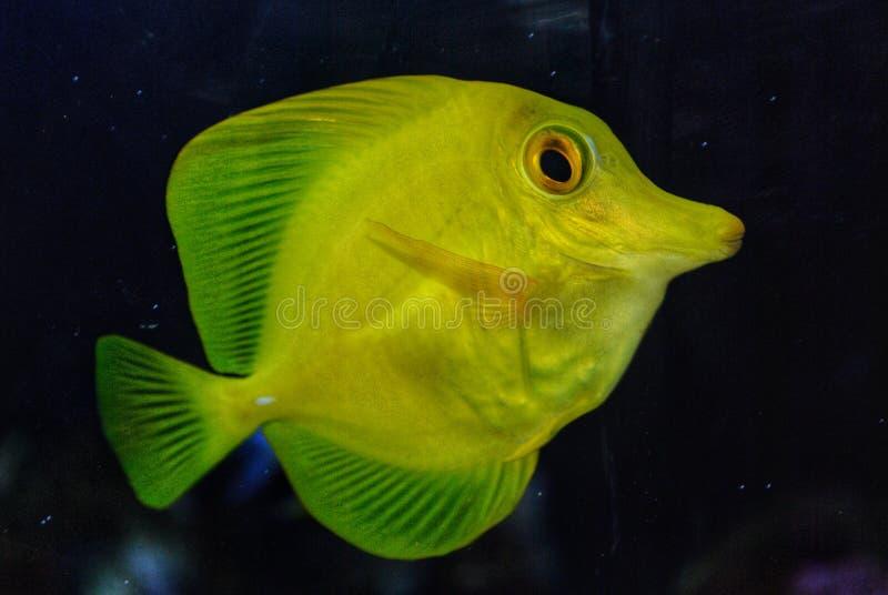 Ryba zdjęcie royalty free