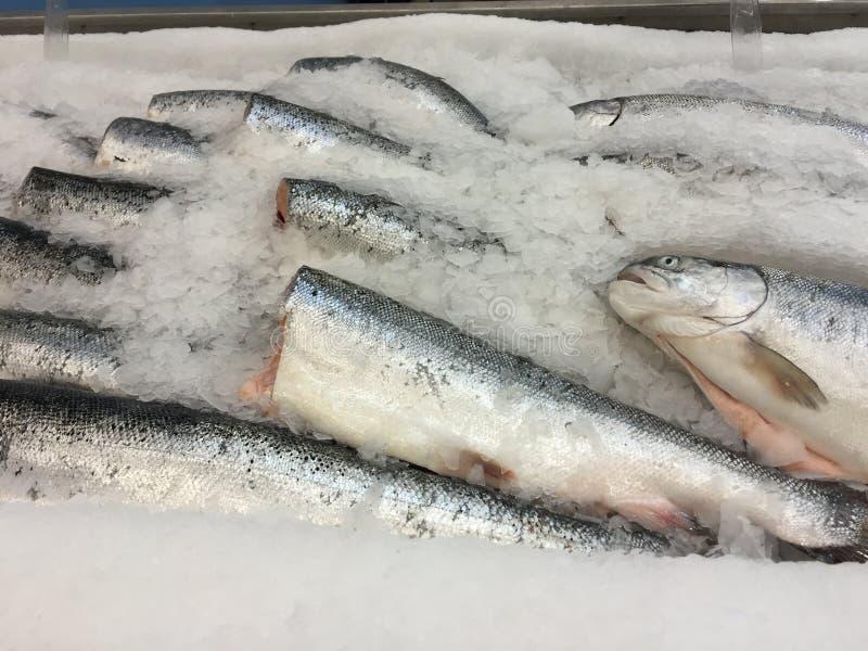 Ryba na lodzie obrazy stock